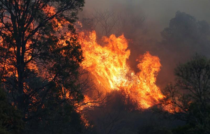 澳洲森林火灾之忧思