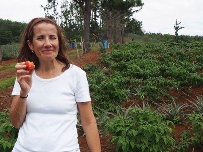 澳洲多达84%的番茄烂在地里..这都要怪超市?