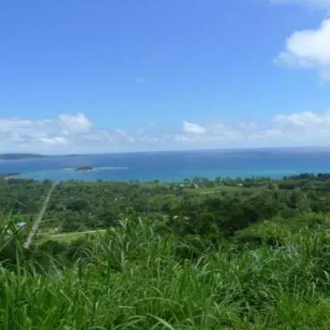 【生活篇】瓦努阿图的动物植物
