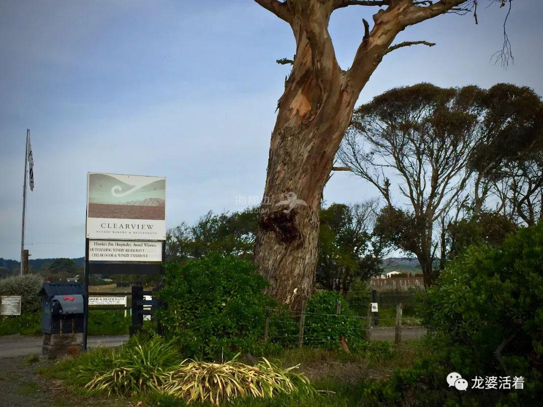 【新西兰】一条大道两酒庄,两种风格区别不是一般地大......Clearview
