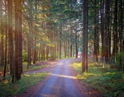 他们在森林里,建立了一个天堂。但是,上帝却不是人类...