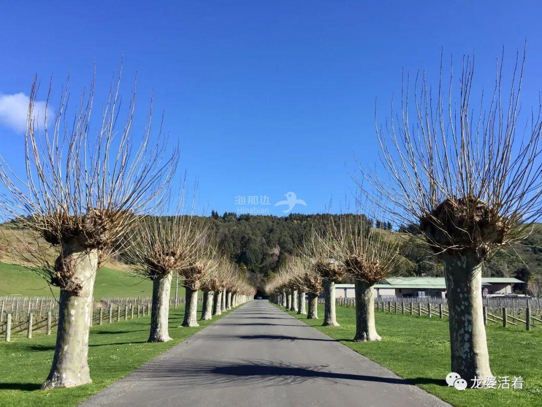 【新西兰】169岁高龄的'古典夫人'坐看云起云落纹丝不动......Mission Estate