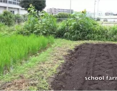 日本小学10块钱的午餐,看完才明白什么是输在起跑线上!