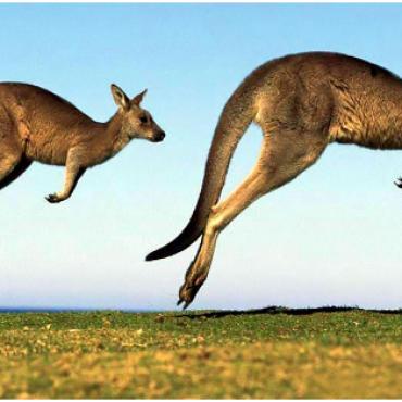 【有奖趣问】第2期之澳洲 据说没答对都不好意思移民澳洲......