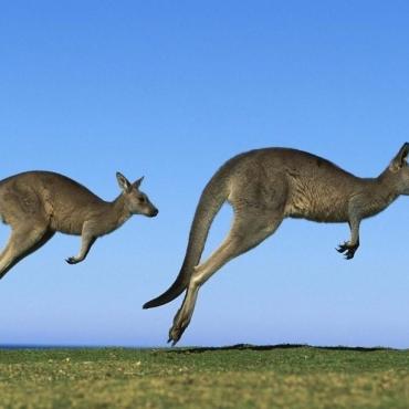 史上最全的澳洲投资移民攻略,拿去不谢!
