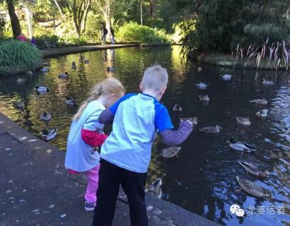 「海外育兒」当鸟宝宝从树上掉下来,新西兰的父女俩都干了些什么?