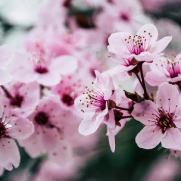 抖音上60万人看新西兰的这种花,到底为什么?