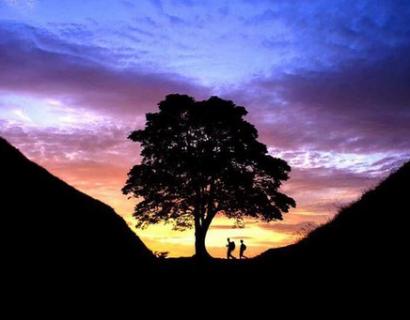 匈牙利的恋爱树传说
