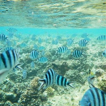 WHVer的斐济自助游攻略