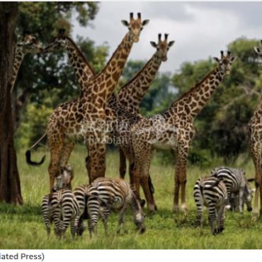 联合国报告:大自然处于人类史上最糟糕状态
