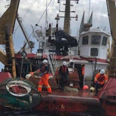 """加拿大为保护鲸鱼在海湾开展清除""""幽灵渔具""""行动"""