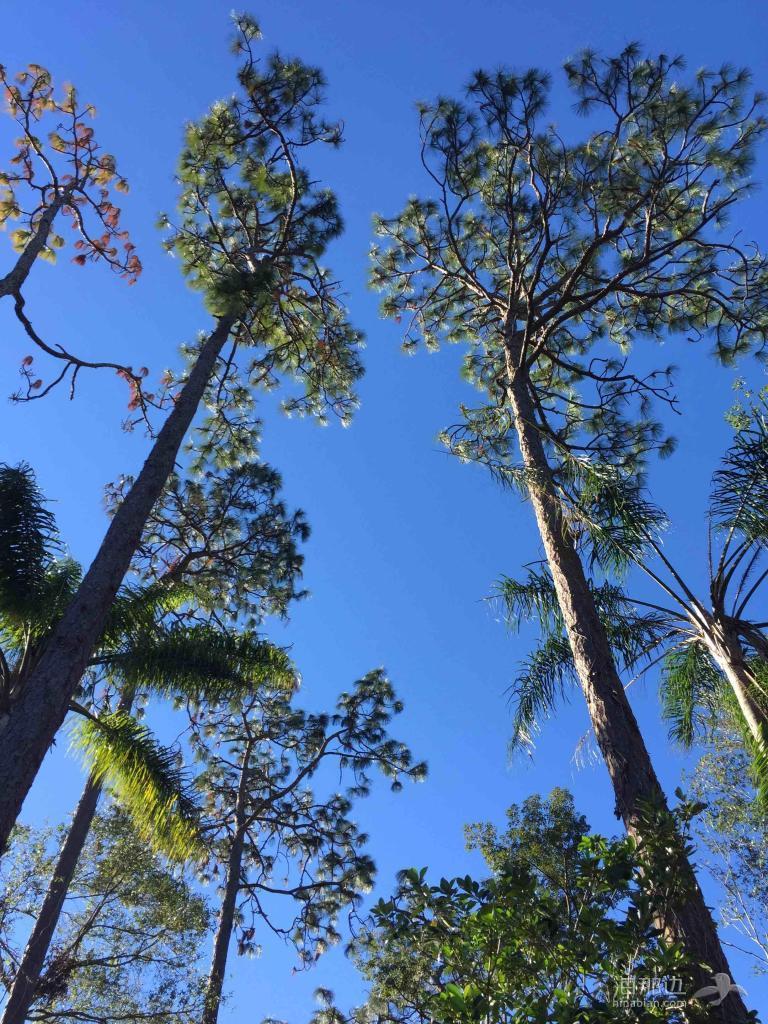 美国南方的冬天-后花园里的天空