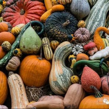 加拿大感恩节为什么在10月?枫叶正好的时节去哪里赏秋,这里全有了!